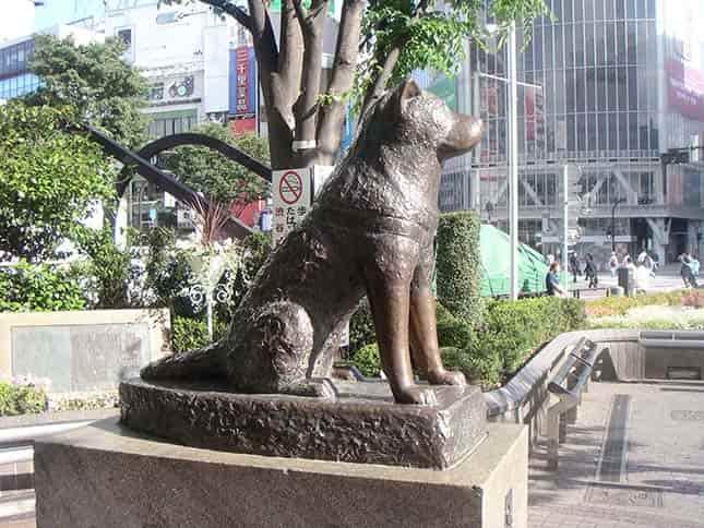 Hachiko - a hűséges kutya bronzból készült szobra Tokyóban